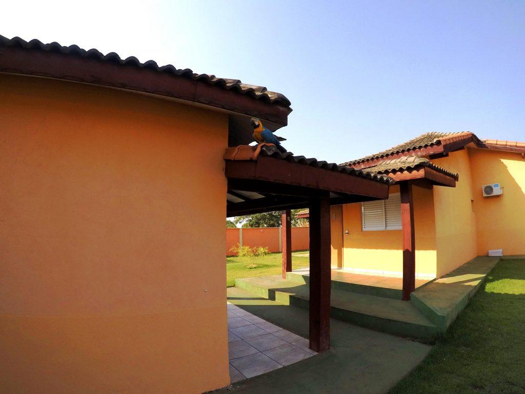 """Arara Azul """"Lara"""" fazendo uma visita a pousada Jardim do Cerrado"""